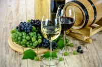 A la découverte des cépages des vins du jura