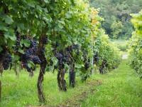 Macvin du Jura : quel accompagnement pour ce vin ?